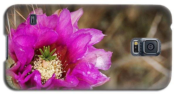 Desert Bloom Galaxy S5 Case by Anthony Citro