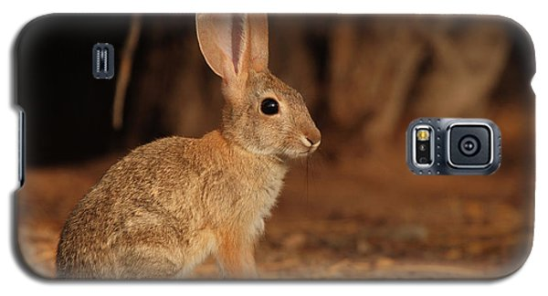 Galaxy S5 Case featuring the photograph Desert Cottontail Posing by Max Allen