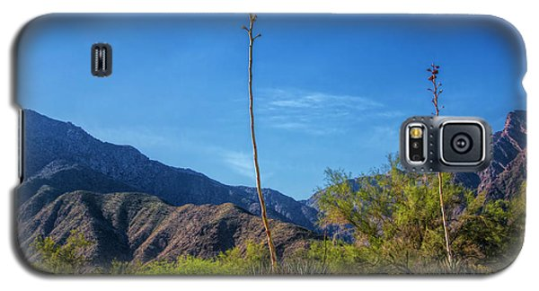 Galaxy S5 Case featuring the photograph Desert Flowers In The Anza-borrego Desert State Park by Randall Nyhof