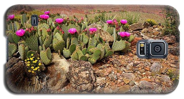 Desert Cactus In Bloom Galaxy S5 Case