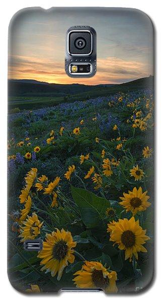 Desert Gold Galaxy S5 Case