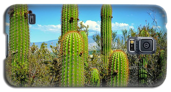 Galaxy S5 Case featuring the photograph Desert Plants - All In The Family by Glenn McCarthy