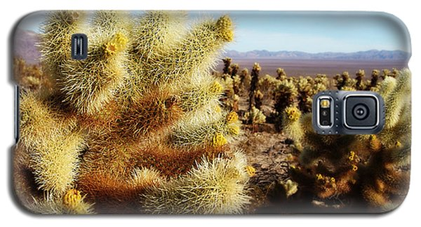 Galaxy S5 Case featuring the photograph Desert Plants - Porcupine Cholla by Glenn McCarthy