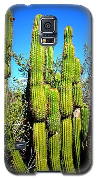Galaxy S5 Case featuring the photograph Desert Plants - Standing Tall by Glenn McCarthy