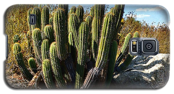Galaxy S5 Case featuring the photograph Desert Plants - The Wild Bunch by Glenn McCarthy