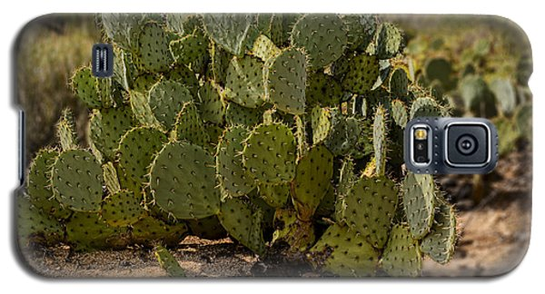 Desert Prickly-pear No6 Galaxy S5 Case by Mark Myhaver