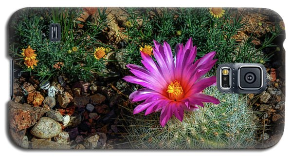 Desert Splash Galaxy S5 Case by Elaine Malott