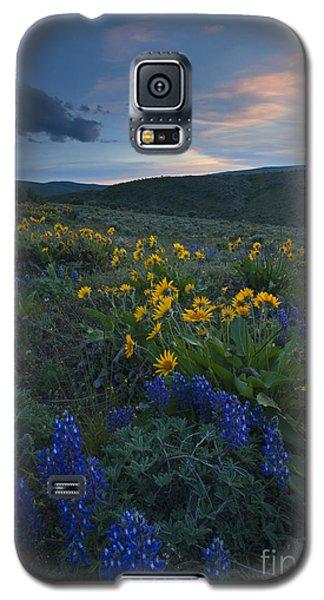 Desert Wildflower Sunset Galaxy S5 Case
