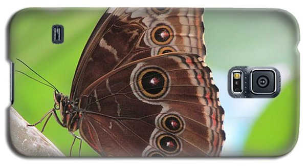 Detailed Wings Galaxy S5 Case