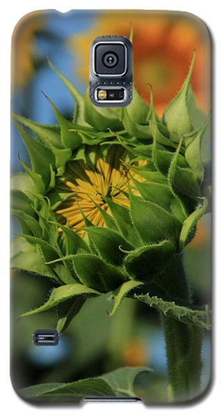 Galaxy S5 Case featuring the photograph Developing Petals On A Sunflower by Chris Berry