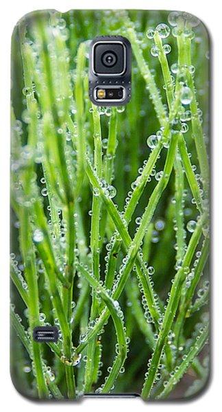 Dew Drop Galaxy S5 Case by Cynthia Traun