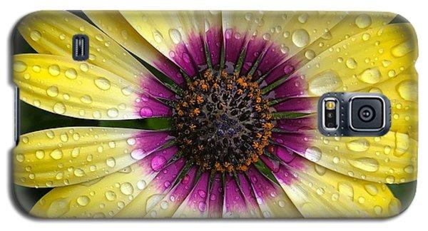 Dew Dropped Daisy Galaxy S5 Case