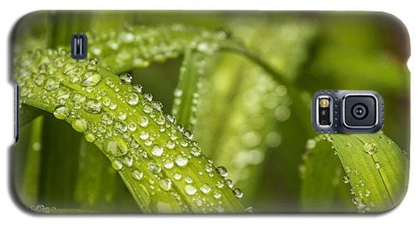 Dew Drops Galaxy S5 Case