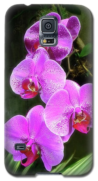 Dew-kissed Moth Orchids Galaxy S5 Case