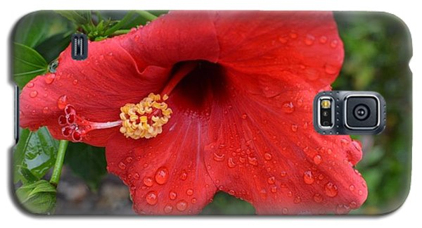 Dew On Flower Galaxy S5 Case