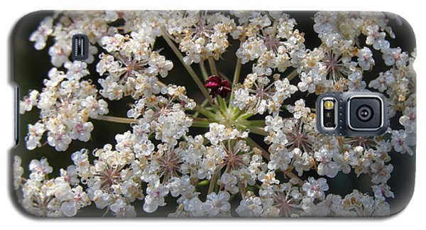 Dew On Queen Annes Lace Galaxy S5 Case