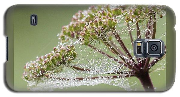 Dewey Jewels Galaxy S5 Case
