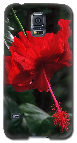 Galaxy S5 Case featuring the photograph Dewy Hibiscus Macro 001 by Lance Vaughn