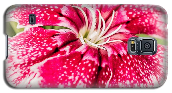 Dianthus Beauty Galaxy S5 Case by Yeates Photography
