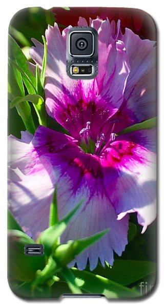 Dianthus Carnation Galaxy S5 Case