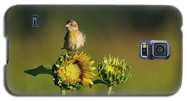 Dickcissel Sunflower Galaxy S5 Case