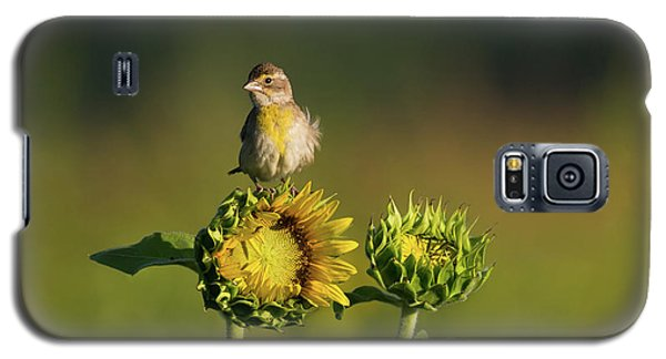 Dickcissel Sunflower Galaxy S5 Case