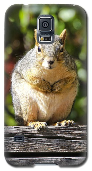 Did You Take My Nuts Galaxy S5 Case by James Steele