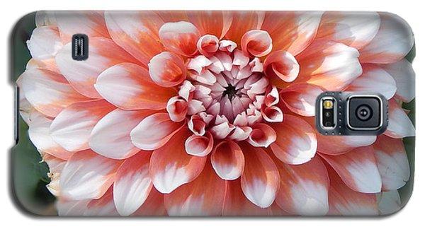 Dahlia Flower- Soft Pink Tones Galaxy S5 Case