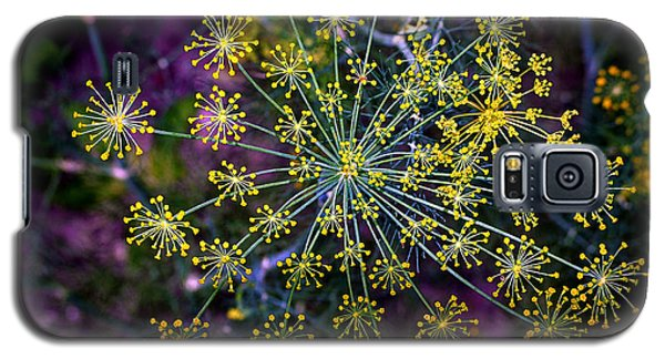 Dill Going To Seed Galaxy S5 Case