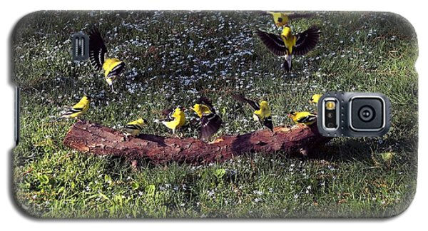 Goldfinch Convention Galaxy S5 Case