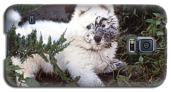 Dirty Dog Birthday Card Galaxy S5 Case