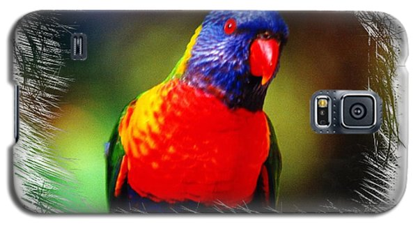 Do-00153 Colourful Lorikeet Galaxy S5 Case
