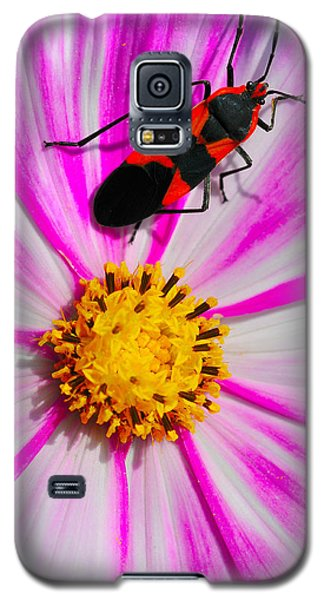 Do I Clash With This Flower? Galaxy S5 Case