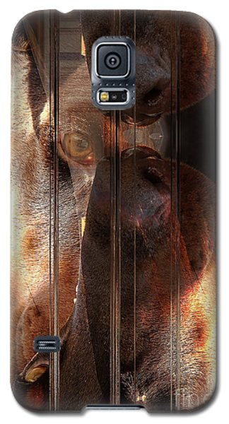 Doberman Pincher Galaxy S5 Case
