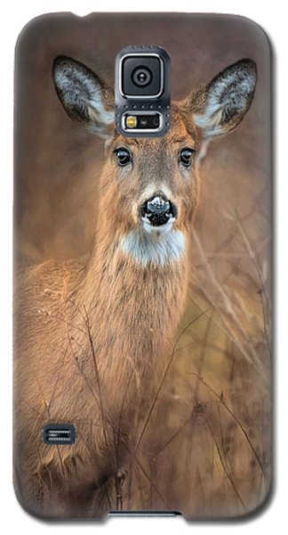 Galaxy S5 Case featuring the photograph Doe A Deer by Robin-Lee Vieira