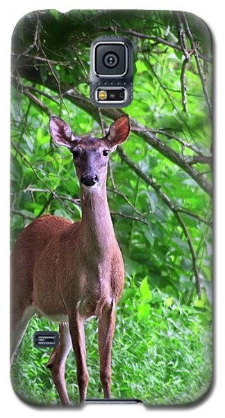 Doe And Cardinal Galaxy S5 Case