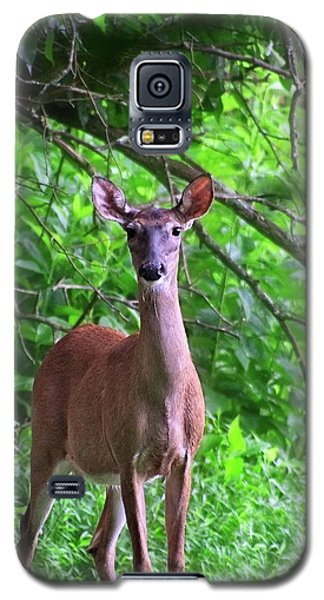 Doe And Cardinal Galaxy S5 Case