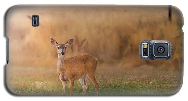 Doe At Sunset Galaxy S5 Case