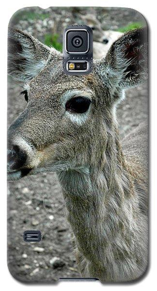 Galaxy S5 Case featuring the photograph Doe Eyes by LeeAnn McLaneGoetz McLaneGoetzStudioLLCcom