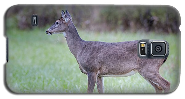 Galaxy S5 Case featuring the photograph Doe In Cades Cove by Tyson Smith
