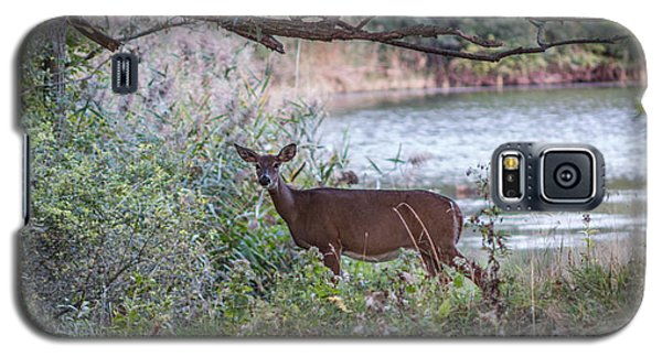 Doe Under Arching Branches Galaxy S5 Case by Chris Bordeleau