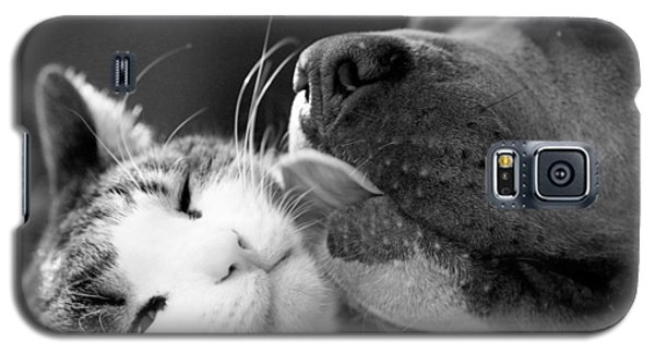 Dog And Cat  Galaxy S5 Case by Sumit Mehndiratta