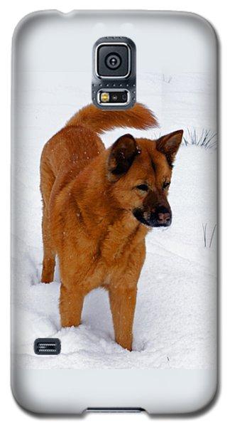 Dog Days Of Winter Galaxy S5 Case by Jean Haynes