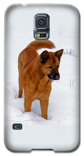 Galaxy S5 Case featuring the photograph Dog Days Of Winter by Jean Haynes
