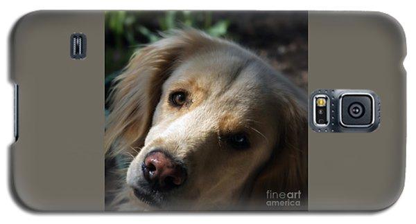 Dog Eyes Galaxy S5 Case