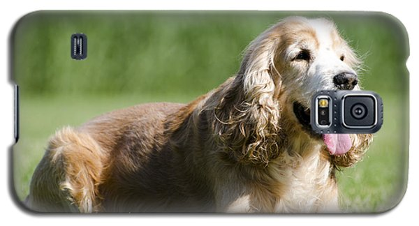 Dog Lying Down On The Green Grass Galaxy S5 Case