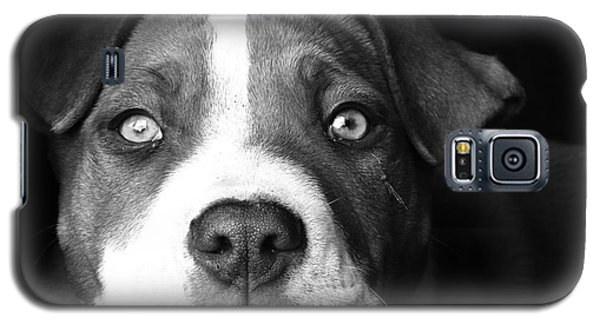 Dog - Monochrome 2 Galaxy S5 Case