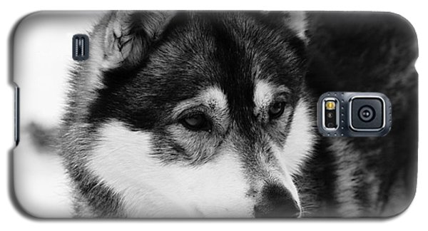 Dog - Monochrome 3 Galaxy S5 Case