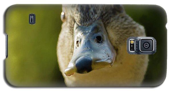 Dog On A Duck Galaxy S5 Case