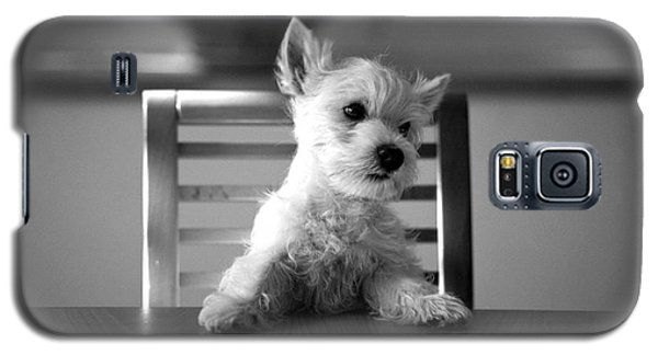 Dog Sitting On The Table Galaxy S5 Case